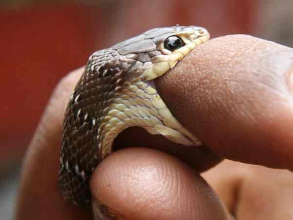 Nằm mơ bị rắn cắn là điềm báo gì?