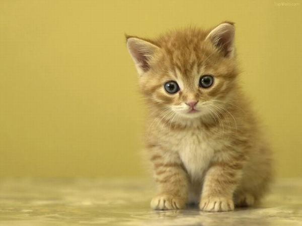 Ngủ mơ thấy mèo vàng là điềm báo lành hay dữ?